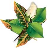 розы состава bouton белые Стоковая Фотография