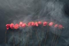 Розы стиля Goth сухие, черная предпосылка с дымом Стоковое фото RF