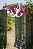 розы строба сада открытые стоковое фото rf