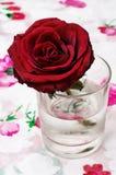 Розы сломленного бутона душистые Стоковое Фото
