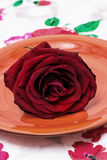 Розы сломленного бутона душистые Стоковое Изображение RF