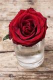 Розы сломленного бутона душистые Стоковое Изображение