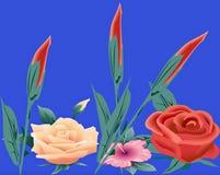 розы цветений Стоковые Изображения