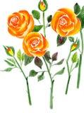 Розы чая Стоковые Фотографии RF