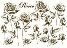 Розы чертежа руки на белой предпосылке Иллюстрация штока