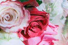 Розы для счастливого стоковые фото