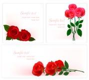 розы 3 красотки предпосылок Стоковое Фото