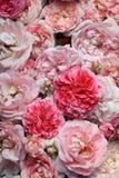 Розы. Стоковое фото RF