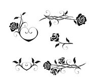 розы Стоковое Фото