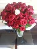 розы стоковые изображения