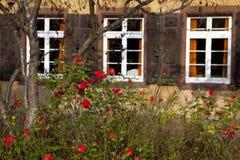 розы bush стоковая фотография rf