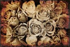 розы grunge предпосылки Стоковая Фотография