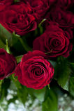 Розы Res Стоковые Изображения RF