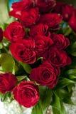 Розы Res Стоковые Фото