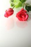 Розы Romance Стоковые Фотографии RF
