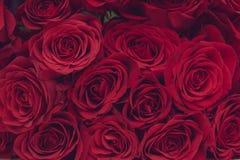 розы rosebuds предпосылки красные Стоковая Фотография RF
