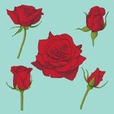 Розы vector комплект бесплатная иллюстрация