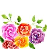 5 роз Стоковые Изображения RF
