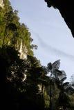 Рой летучей мыши, Борнео Стоковая Фотография