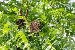 Рой пчел в дереве стоковое фото rf