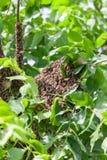 Рой пчел в дереве стоковая фотография