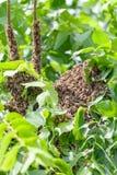Рой пчел в дереве стоковое изображение rf