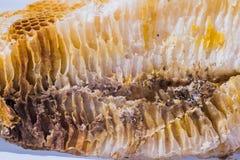 Рой пчелы меда Стоковое Изображение RF