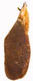 Рой пчелы меда Стоковые Изображения RF