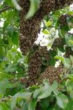 Рой пчел стоковые изображения