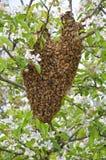 Рой пчел стоковая фотография