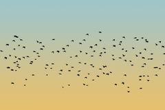 Рой силуэта птицы Стоковое Изображение RF