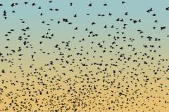 Рой силуэта птицы Стоковая Фотография RF