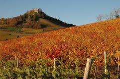 рокируйте виноградники langhe стоковая фотография