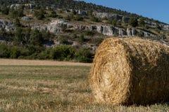 Роль соломы в поле стоковые изображения