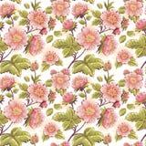 Романтичная безшовная текстура с красивейшими цветками Стоковое Фото