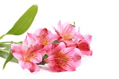 Романтичная конструкция цветка Стоковая Фотография