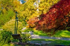 Романтичная листва в pubblic parck в Турине Пьемонте, Италии Стоковые Фото