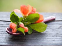 Романтичная ложка десерта со свежим цветком стоковая фотография rf