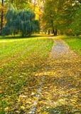 Романтичная дорога в парке Стоковое Изображение