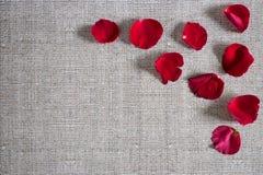 Романтичная предпосылка с лепестками розы Стоковая Фотография