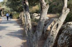 Романтичная прогулка через прованский переулок в парке Стоковые Фотографии RF