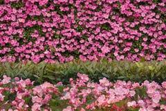 Романтичная розовая предпосылка цветка с текстурой цветка стоковое фото