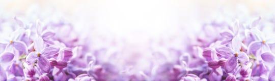 Романтичная флористическая предпосылка с фиолетовой или фиолетовой сиренью цветет Стоковые Фотографии RF