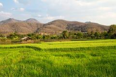Романтичное пшеничное поле Стоковое Изображение