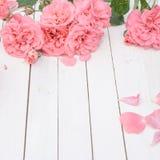 Романтичные розовые розы на белой деревянной предпосылке Стоковое Изображение