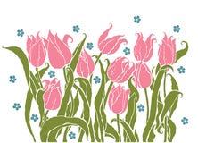 Романтичные тюльпаны Стоковые Изображения RF
