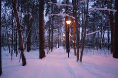 Романтичный вечер зимы в парке стоковые фотографии rf
