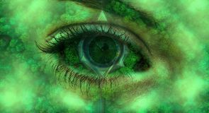 Романтичный глаз изображения природы вполне деревьев иллюстрация штока
