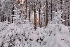 Романтичный заход солнца в древесине зимы Стоковая Фотография RF