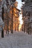 Романтичный заход солнца в древесине зимы Стоковые Изображения RF